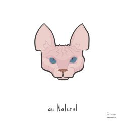 au Natural — Trendy Hair Styles for Sphinx Cats