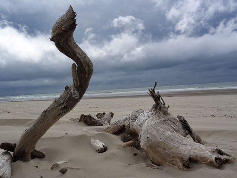 Driftwood Study, Brent Pruitt, digital photograph, 2013