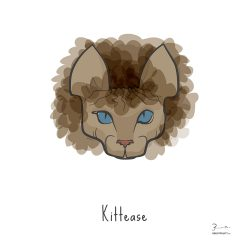 Kittease — Trendy Hair Styles for Sphinx Cats