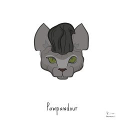 Pawpawdour — Trendy Hair Styles for Sphinx Cats