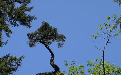 Tree Atop Multnomah Falls, Oregon. Brent Pruitt, photograph, 2009